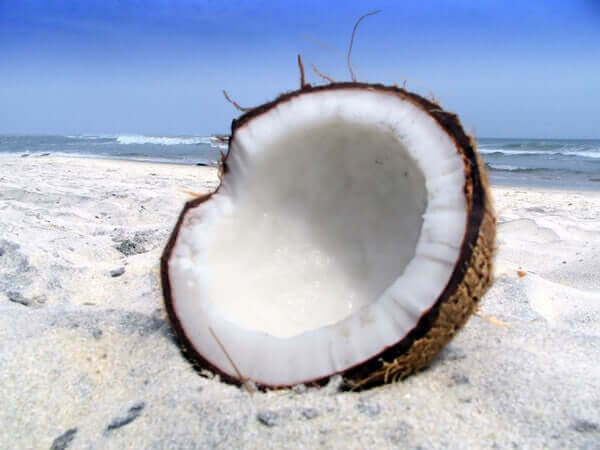 how to make coconut flour with fresh coconut