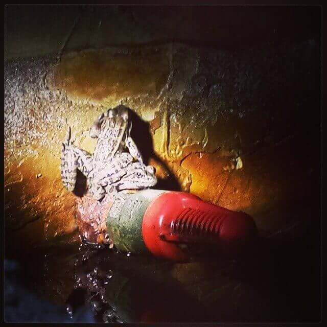 A Frog, A Polar Bear, And A Bullseye On My Bottom (Levi's Birth Story)