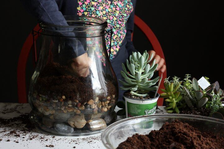 how-to-make-a-terrarium
