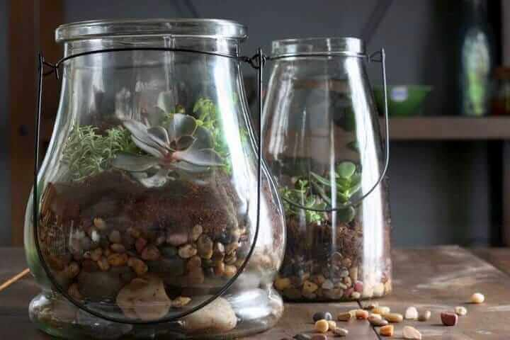 how-to-make-terrarium1