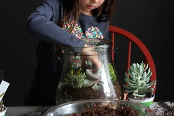 how-to-make-terrarium