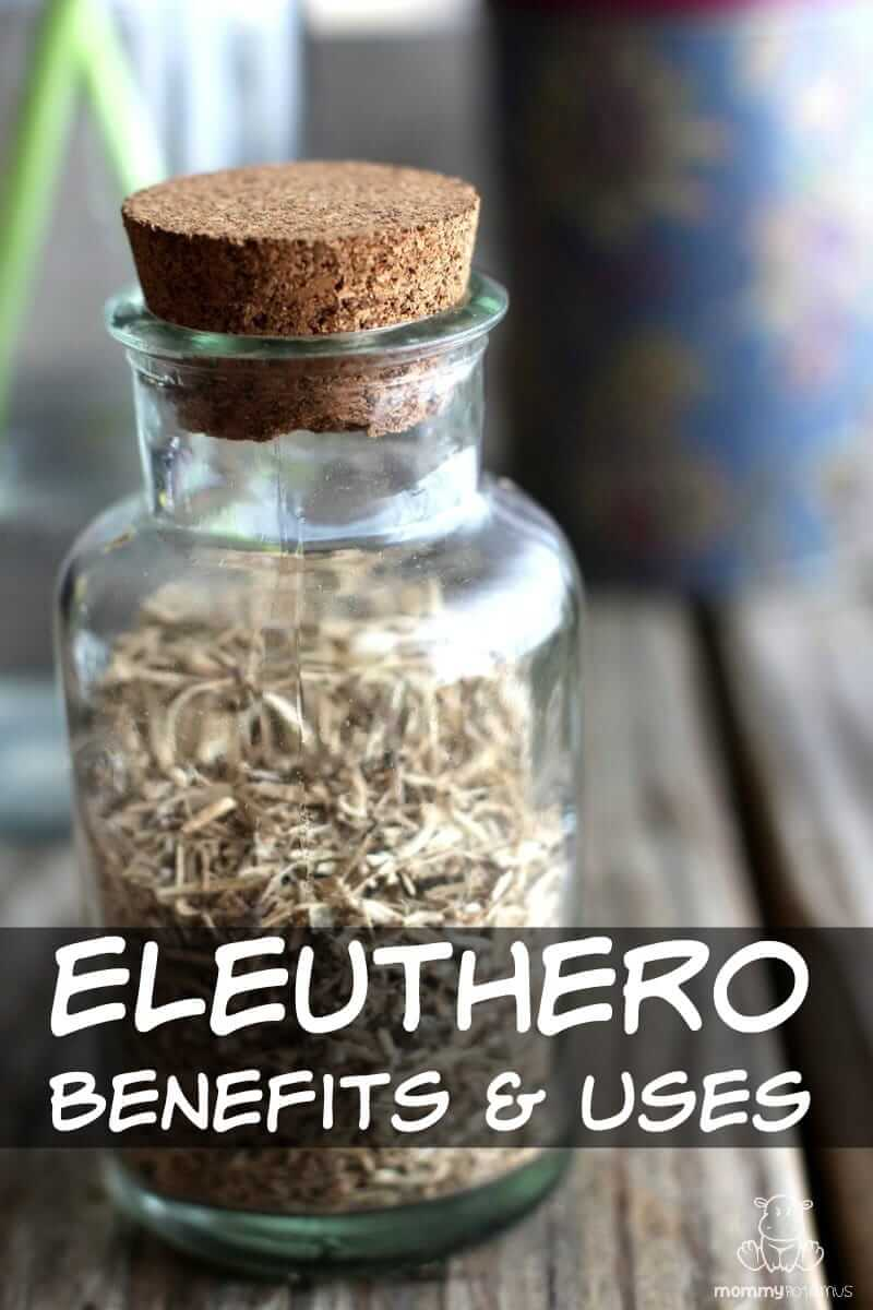 Eleuthero Benefits And Uses