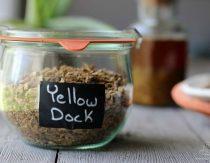 yellow-dock-benefits-uses