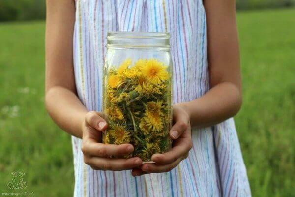 Dandelion For Detox, Digestion and Hormone Balance