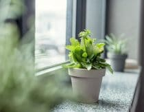 6 Ways To Improve Indoor Air Quality (And Why You Need To)
