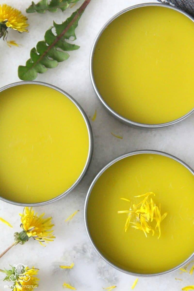 Dandelion Salve Recipe - Rich in anti-inflammatory antioxidants, polyphenols and flavonoids, this dandelion salve works beautifully as an all-purpose healing balm for cuts, scrapes, burns, bug bites, chapped skin and more.